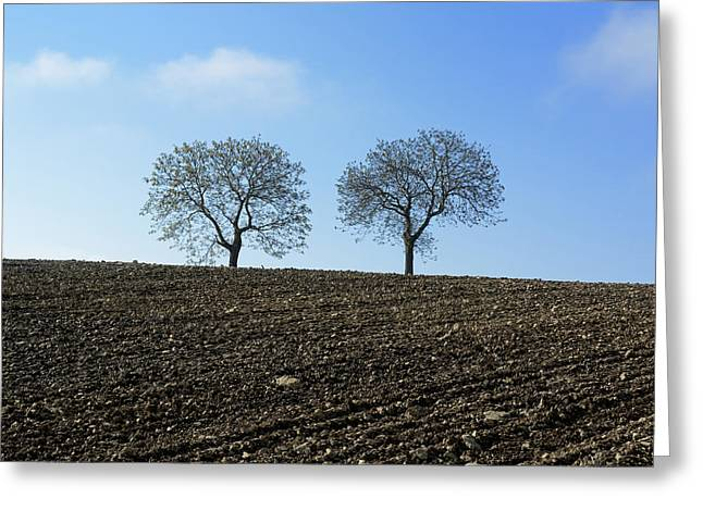 Plowing Field Greeting Cards - Trees in a agricultural landscape. Greeting Card by Bernard Jaubert