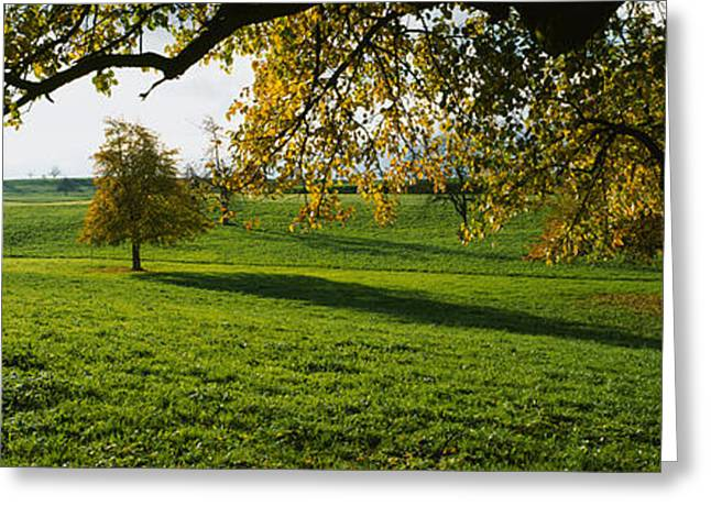 Pear Tree Greeting Cards - Trees In A Field, Aargau, Switzerland Greeting Card by Panoramic Images