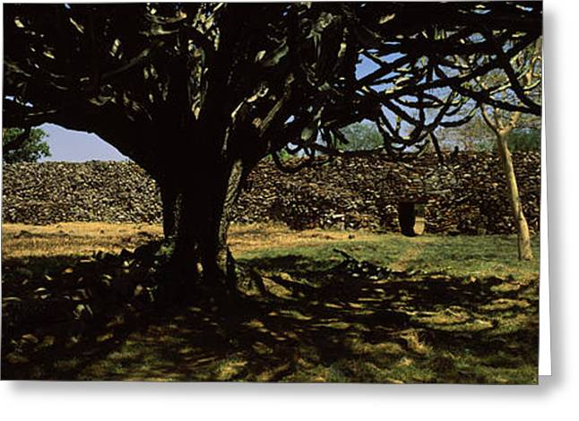 Rift Greeting Cards - Trees In A Field With A Stone Wall Greeting Card by Panoramic Images
