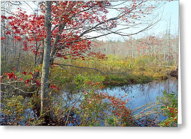 Autumn Colors Greeting Cards - Trees In A Forest, Damariscotta Greeting Card by Panoramic Images
