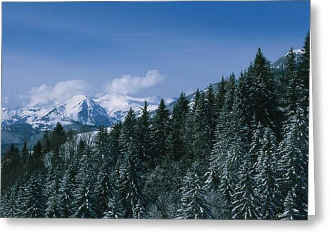 Snow Scene Landscape Greeting Cards - Trees In A Forest, Interlaken, Berne Greeting Card by Panoramic Images