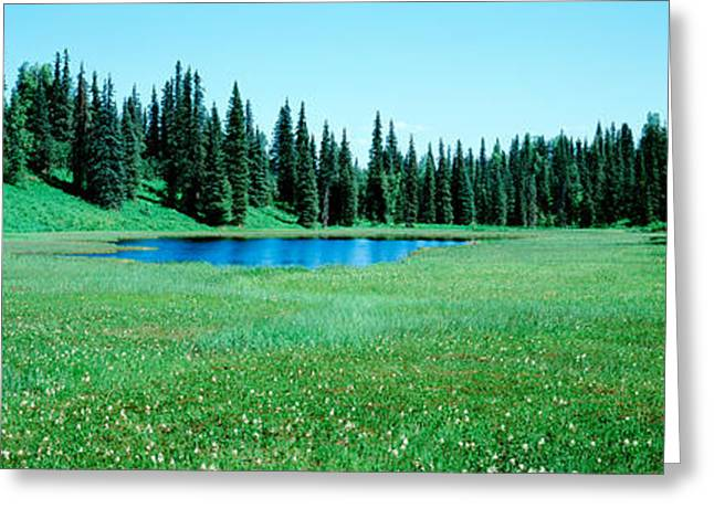 Alaska Scene Greeting Cards - Trees In A Forest, Lakes, Alaska, Usa Greeting Card by Panoramic Images