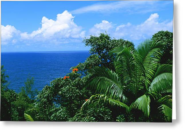 Hamakua Greeting Cards - Trees In A Forest On The Coast, Hamakua Greeting Card by Panoramic Images