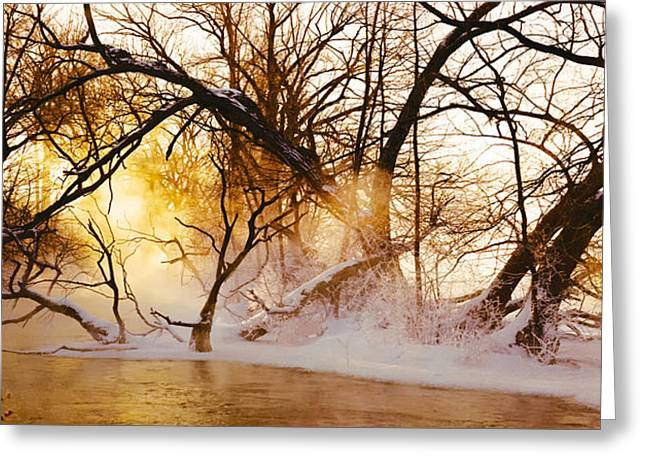 Bare Trees Greeting Cards - Trees In A Forest Greeting Card by Panoramic Images