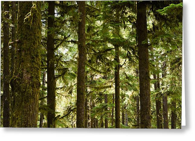Olympic Peninsula Greeting Cards - Trees In A Forest, Queets Rainforest Greeting Card by Panoramic Images