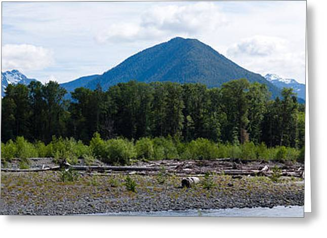 Olympic Peninsula Greeting Cards - Trees In A Forest, Quinault Rainforest Greeting Card by Panoramic Images