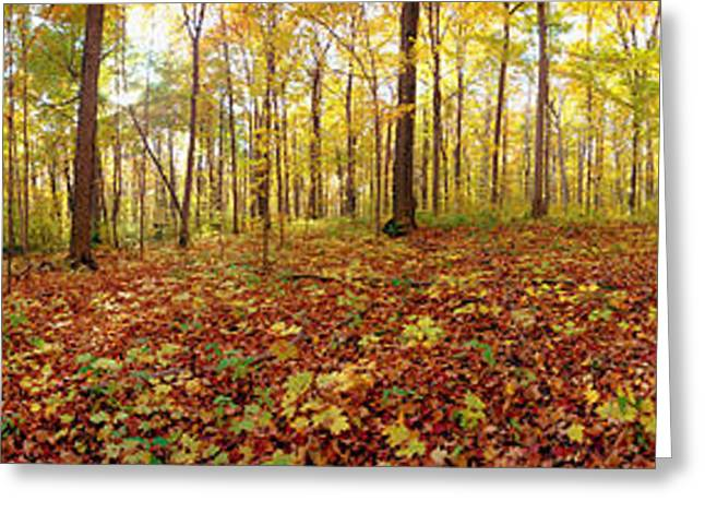 Quebec Scenes Greeting Cards - Trees In A Forest, Saint-bruno, Quebec Greeting Card by Panoramic Images