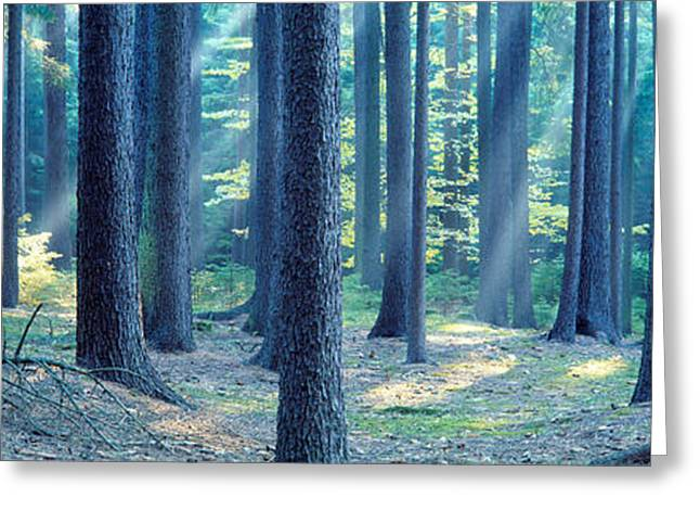 Low Section Greeting Cards - Trees In A Forest, South Bohemia, Czech Greeting Card by Panoramic Images