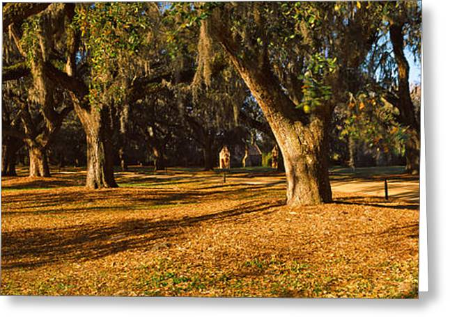 Treelined Greeting Cards - Trees In A Garden, Boone Hall Greeting Card by Panoramic Images