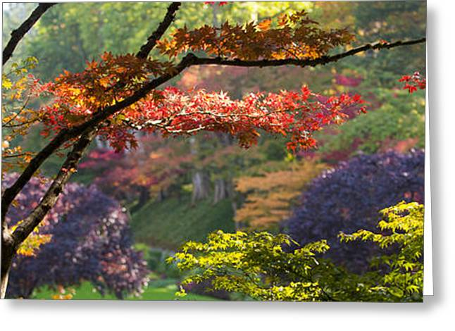 Trees In A Garden Butchart Gardens Greeting Card by Panoramic Images