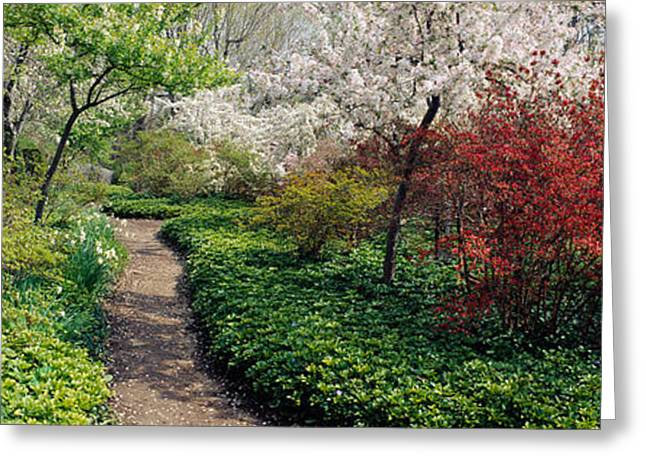 Garden Scene Photographs Greeting Cards - Trees In A Garden, Garden Of Eden Greeting Card by Panoramic Images