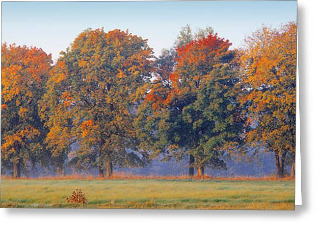 Fall Grass Greeting Cards - Trees In A Garden, South Bohemia, Czech Greeting Card by Panoramic Images