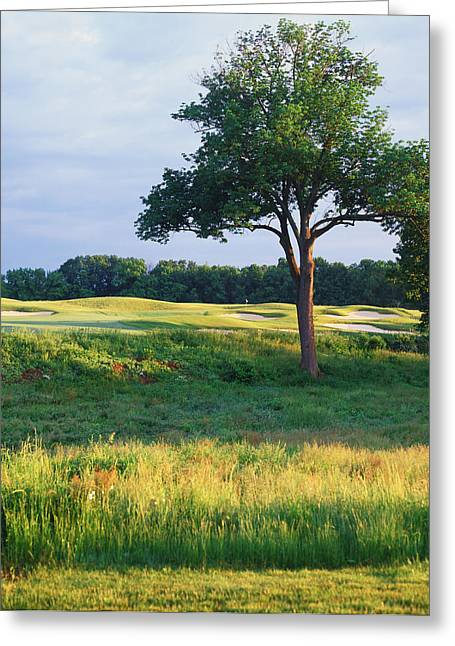 Urban Images Greeting Cards - Trees In A Golf Course, Heron Glen Golf Greeting Card by Panoramic Images