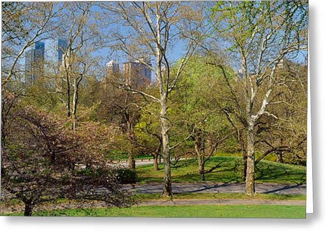 Central Park West Greeting Cards - Trees In A Park, Central Park West Greeting Card by Panoramic Images