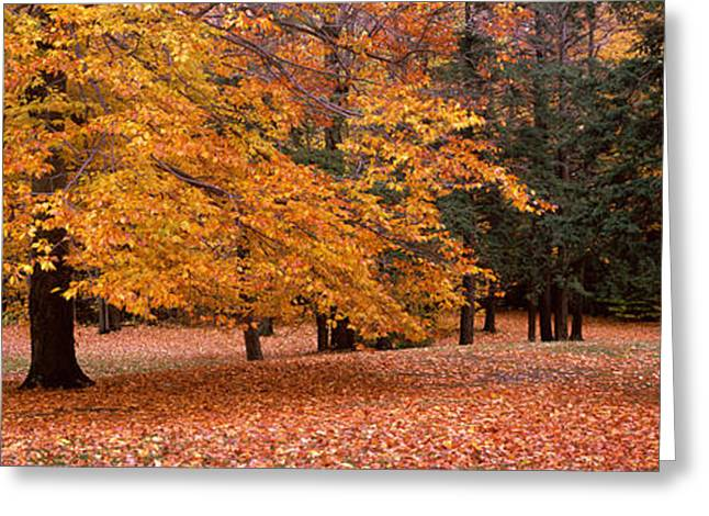 Orchard Greeting Cards - Trees In A Park, Chestnut Ridge County Greeting Card by Panoramic Images
