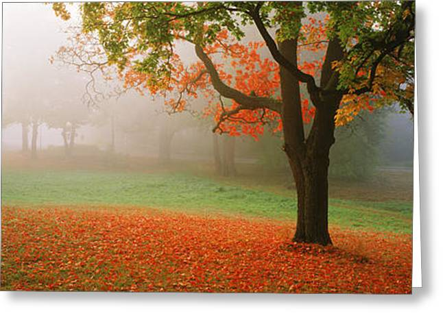 Trees In A Park, Djurgarden, Stockholm Greeting Card by Panoramic Images