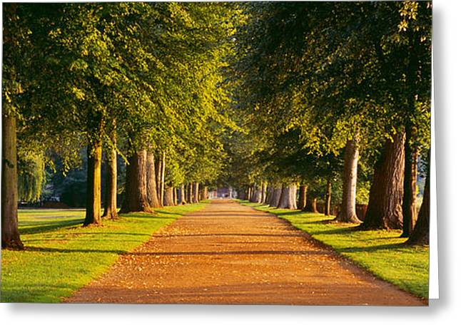 Treelined Greeting Cards - Trees In A Park, Oxford, Oxfordshire Greeting Card by Panoramic Images