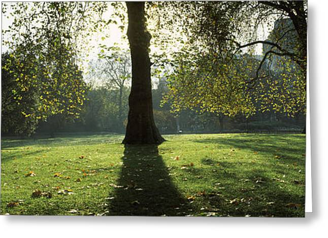 Fallen Leaf Greeting Cards - Trees In A Park, St. Jamess Park Greeting Card by Panoramic Images