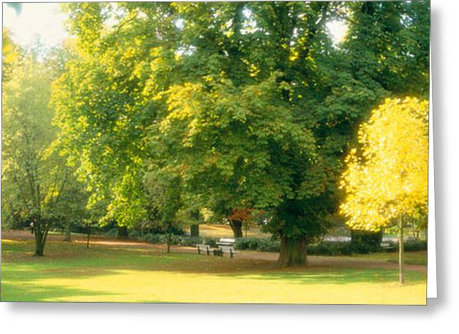 Fall Grass Greeting Cards - Trees In A Park, Wiesbaden, Rhine Greeting Card by Panoramic Images