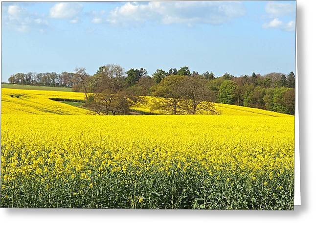 Open Field Greeting Cards - Trees In A Sea Of Gold Greeting Card by Gill Billington