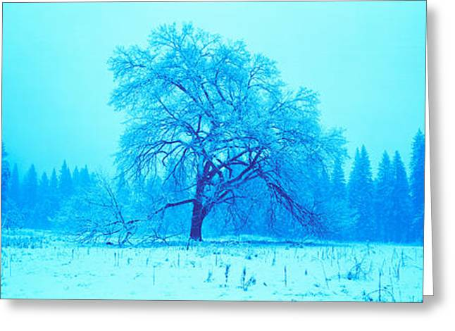 Bare Trees Greeting Cards - Trees In A Snow Covered Landscape Greeting Card by Panoramic Images