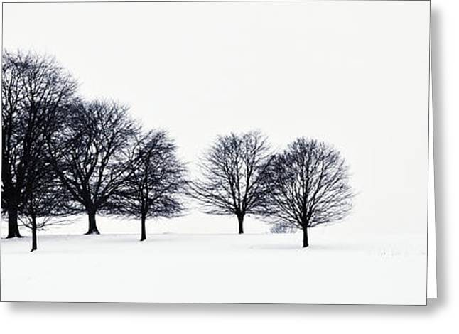 Trees In A Snowy Field In Chatsworth Greeting Card by John Doornkamp