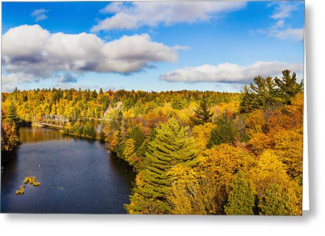 Upper Peninsula Greeting Cards - Trees In Autumn At Dead River Greeting Card by Panoramic Images