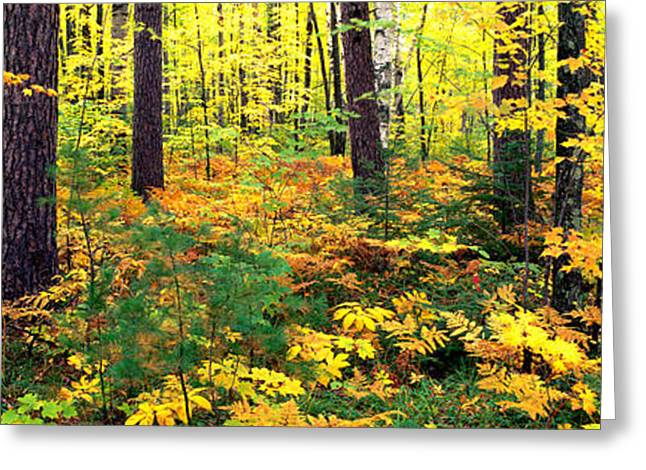 Fall Scenes Greeting Cards - Trees In Autumn, Copper Falls State Greeting Card by Panoramic Images