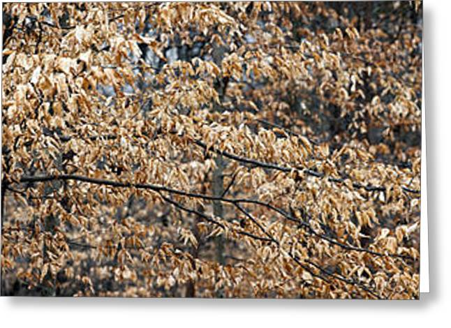 Botany Greeting Cards - Trees In Autumn, Lewisville, Forsyth Greeting Card by Panoramic Images