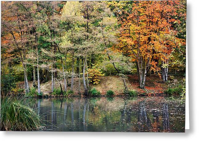 Trees In Autumn Greeting Card by Natalie Kinnear