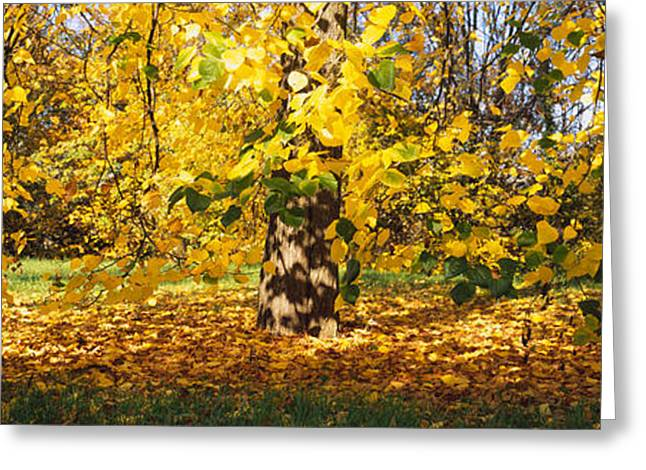 Fallen Leaf Greeting Cards - Trees In Autumn, Stuttgart Greeting Card by Panoramic Images