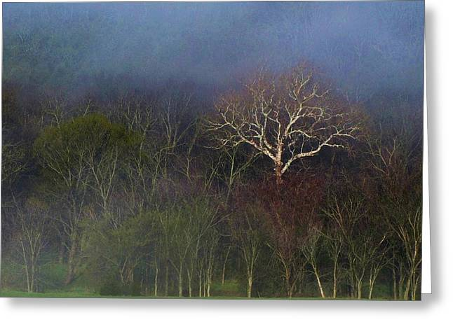 Trees In Fog 4 Greeting Card by Dena Kidd