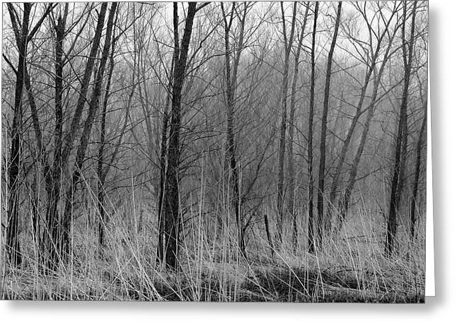 Km Corcoran Greeting Cards - Trees in Fog Columbia Bottoms Greeting Card by KM Corcoran