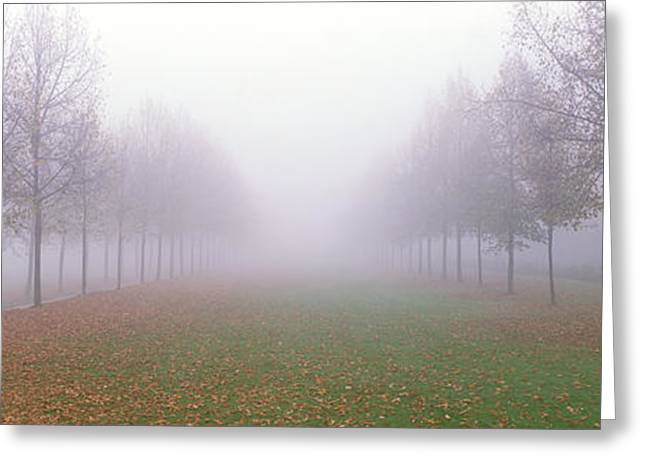 Envelop Greeting Cards - Trees In Fog Schleissheim Germany Greeting Card by Panoramic Images