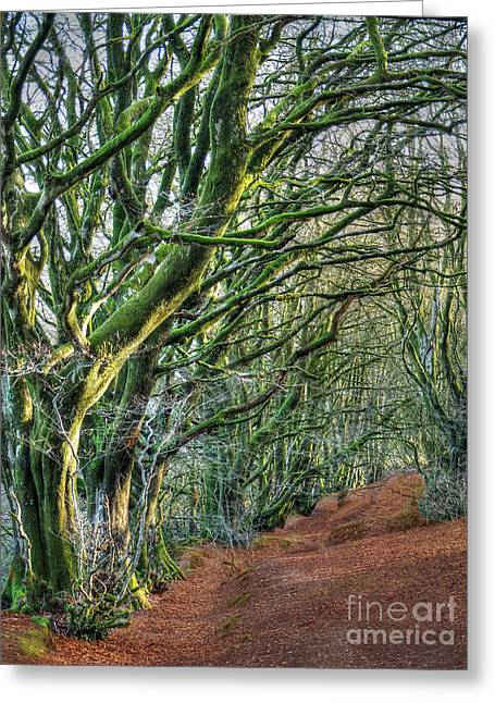 Wood Greeting Cards - Trees in Forest Devon Greeting Card by Curtis Radclyffe
