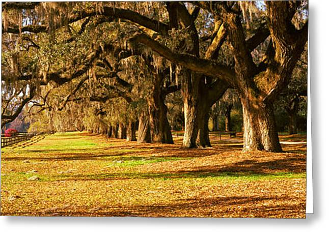 Trees In Garden, Boone Hall Plantation Greeting Card by Panoramic Images