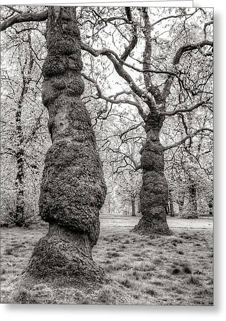 Trees In Hyde Park London Greeting Card by Jim Hughes