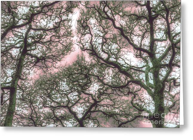 Stormy Greeting Cards - Trees in Kyoto Garden Japan Greeting Card by Curtis Radclyffe