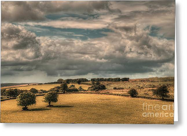 Stormy Greeting Cards - Trees in Landscape Exmoor Greeting Card by Curtis Radclyffe