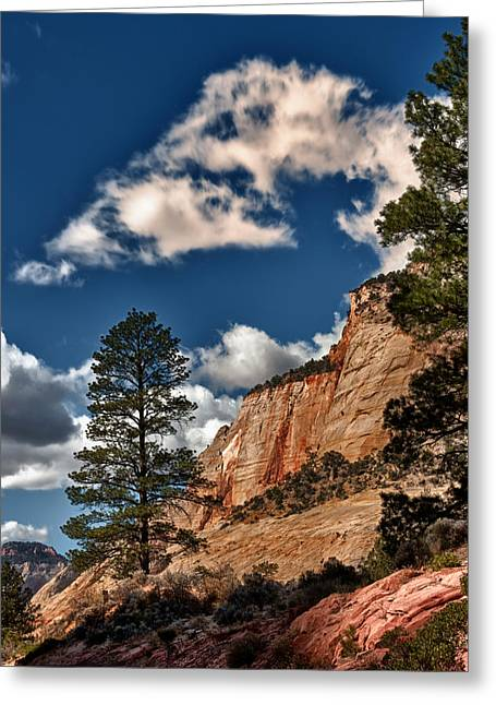 Hdr Landscape Greeting Cards - Trees in Line Greeting Card by Juan Carlos Diaz Parra