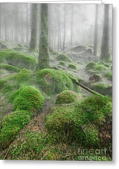 Foggy Landscapes Greeting Cards - Trees in mist Greeting Card by Rod McLean