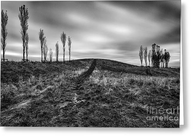 Scotland Landscapes Greeting Cards - Trees in mono Greeting Card by John Farnan