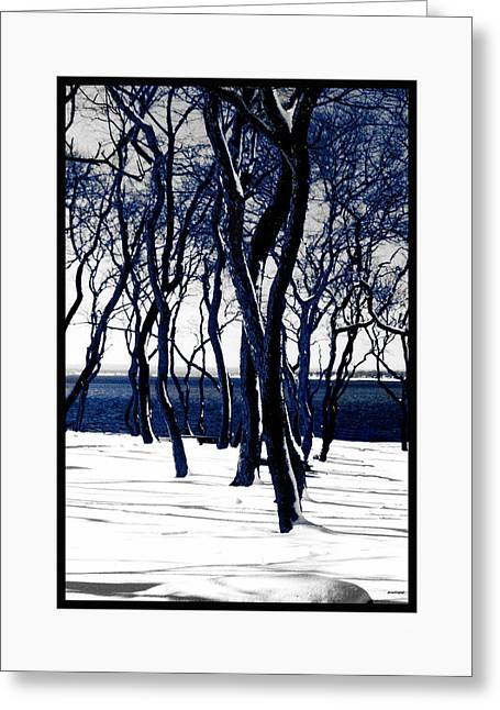 Photographic Art For Sale Greeting Cards - Trees in Snow II Bristol Rhode Island Greeting Card by Tom Prendergast