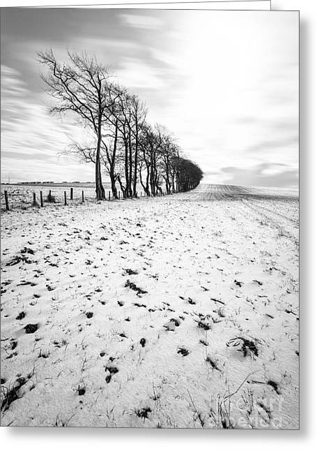 Mono Landscape Greeting Cards - Trees in snow Scotland ii Greeting Card by John Farnan