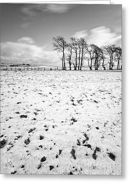 Trees In Snow Scotland IIi Greeting Card by John Farnan