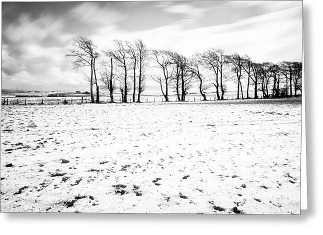 Snow White Greeting Cards - Trees in snow Scotland iv Greeting Card by John Farnan