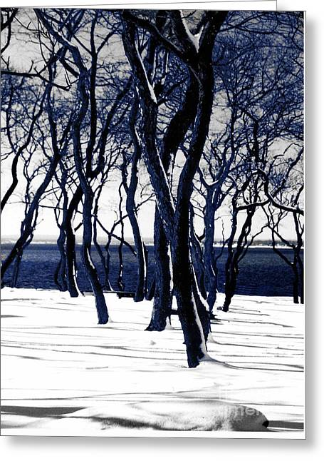 Photographic Art For Sale Greeting Cards - Trees in snow Colt State Park Bristol Rhode Island Bristol RI Greeting Card by Tom Prendergast