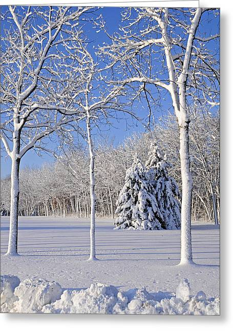 Wintry Photographs Greeting Cards - Trees In Snow  Wisconsin Greeting Card by Anonymous
