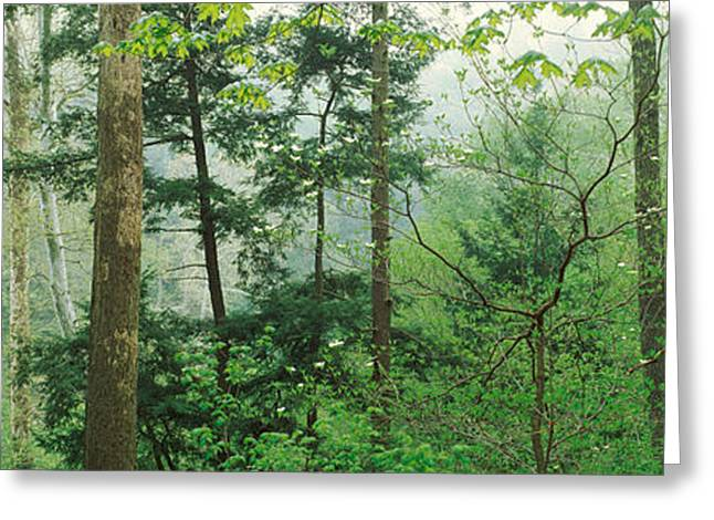 Turkey Run State Park Greeting Cards - Trees In Spring Forest, Turkey Run Greeting Card by Panoramic Images