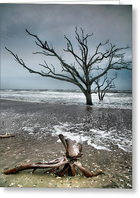 Storm Prints Photographs Greeting Cards - Trees In Surf Greeting Card by Steven Ainsworth
